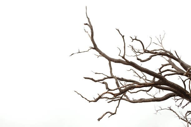 22 Lovely Ways You Can Use Twigs And Branches