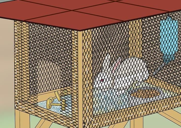 Basic Rabbit Hutch Plan And The Science Behind It