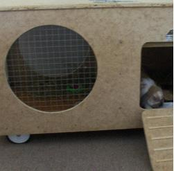 Mobile Rabbit Hutch Inside Your Home