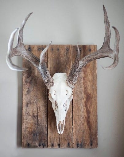 Deer Head Wall Decor Rustic