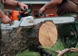 Learn How To Control A Chainsaw