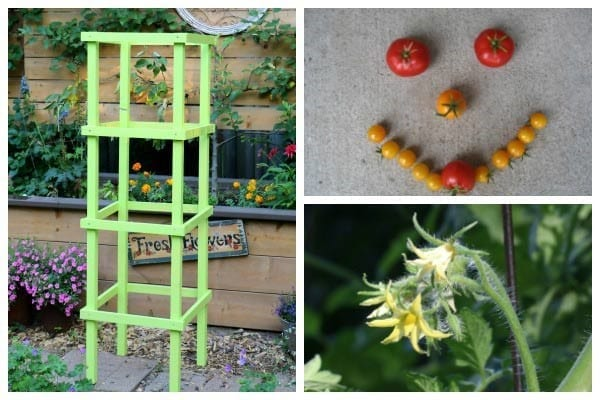 How To Make Tomato Cages From Wood Cut The Wood