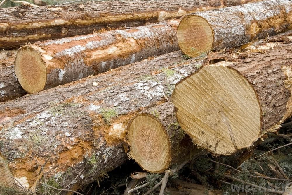 What Is Green Wood