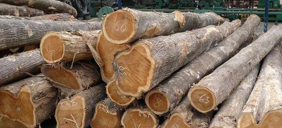 Where Does Teak Wood Come From
