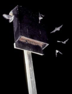 Bat House For Expectant Mothers