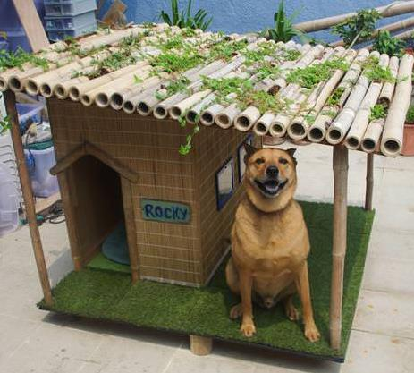 Rocky's Tropical Or Summer Dog House 1
