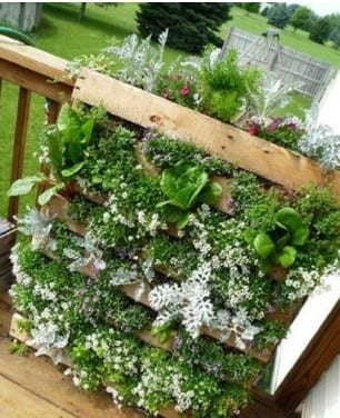 Pallet Grow Space