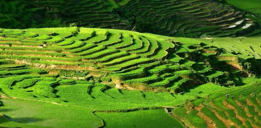 Zafimaniry Rice Cultivation The Crops Of The Future